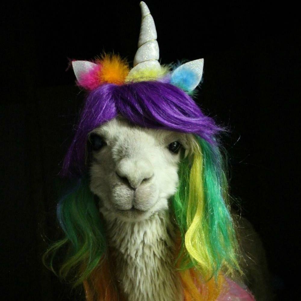 Alpaca unicornio