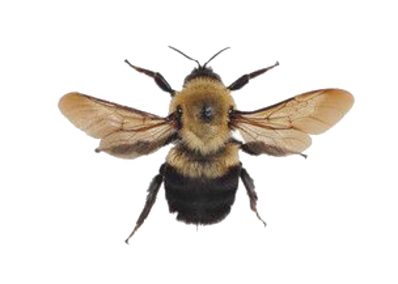 Pngs For Moodboards Png Bee Insects