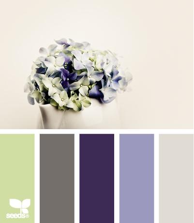 Overcast Hydrangea  Design Seeds®