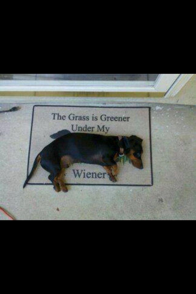 The grass is greener under my weiner...dog #Dachshund #DoxieDarlin'