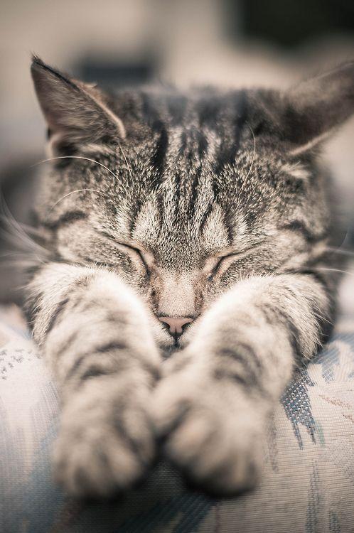 Serendipitouswanderings Via Pin By Cheryl Haseman On Kitty Cats Pinterest Katzen Katzen Pfoten Tierbilder