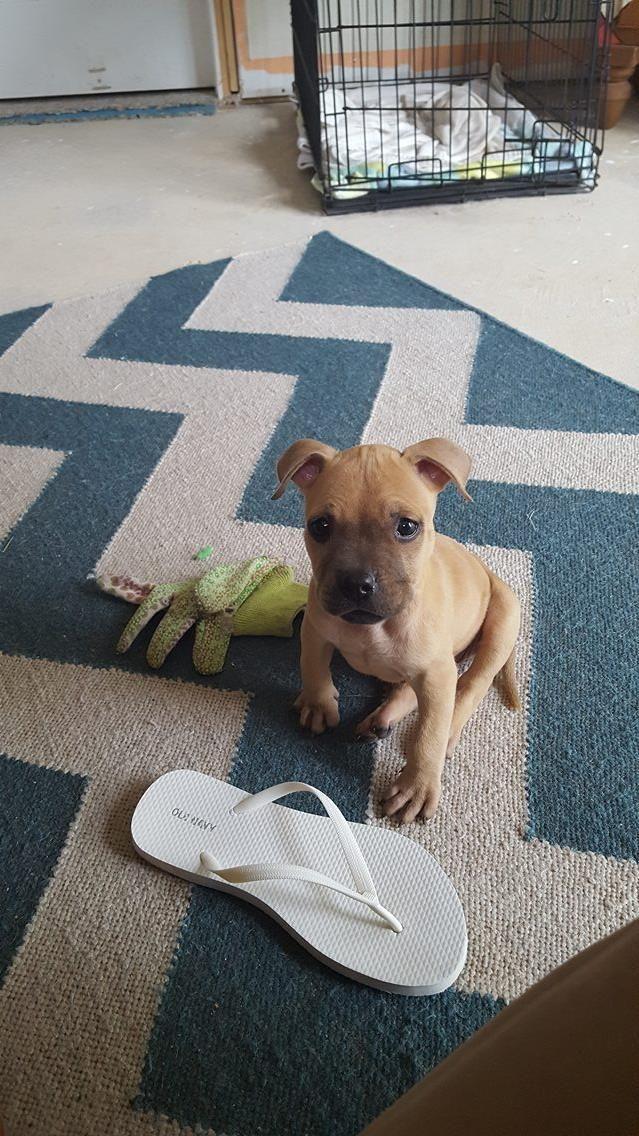 Adopt Mindy on Dogs, Animal rescue, Adoption