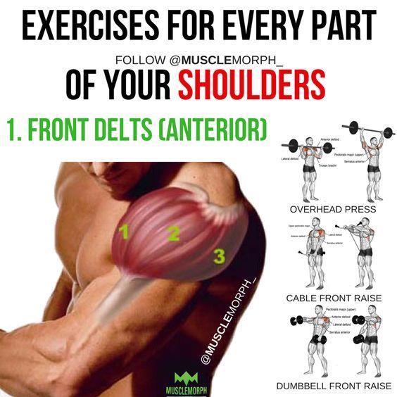 shoulder workout shoulder exercise front delts anterior delts ...