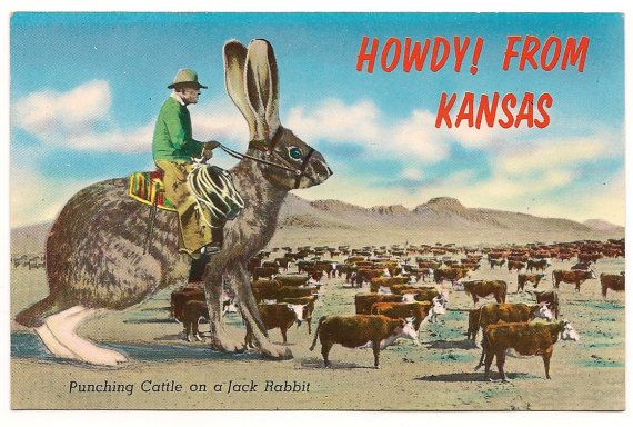 Vintage Howdy From Kansas Jack Rabbit by pecanhillantiques on Etsy, $4.99