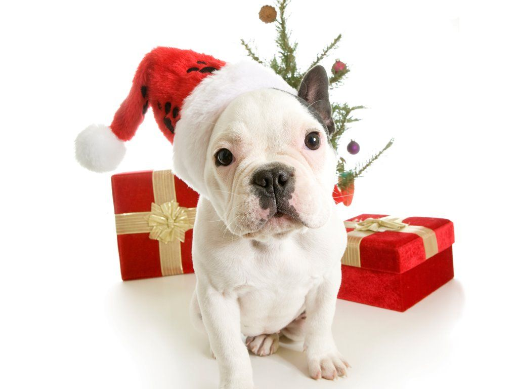 Be The Puppy Reduce your stress during the holidays