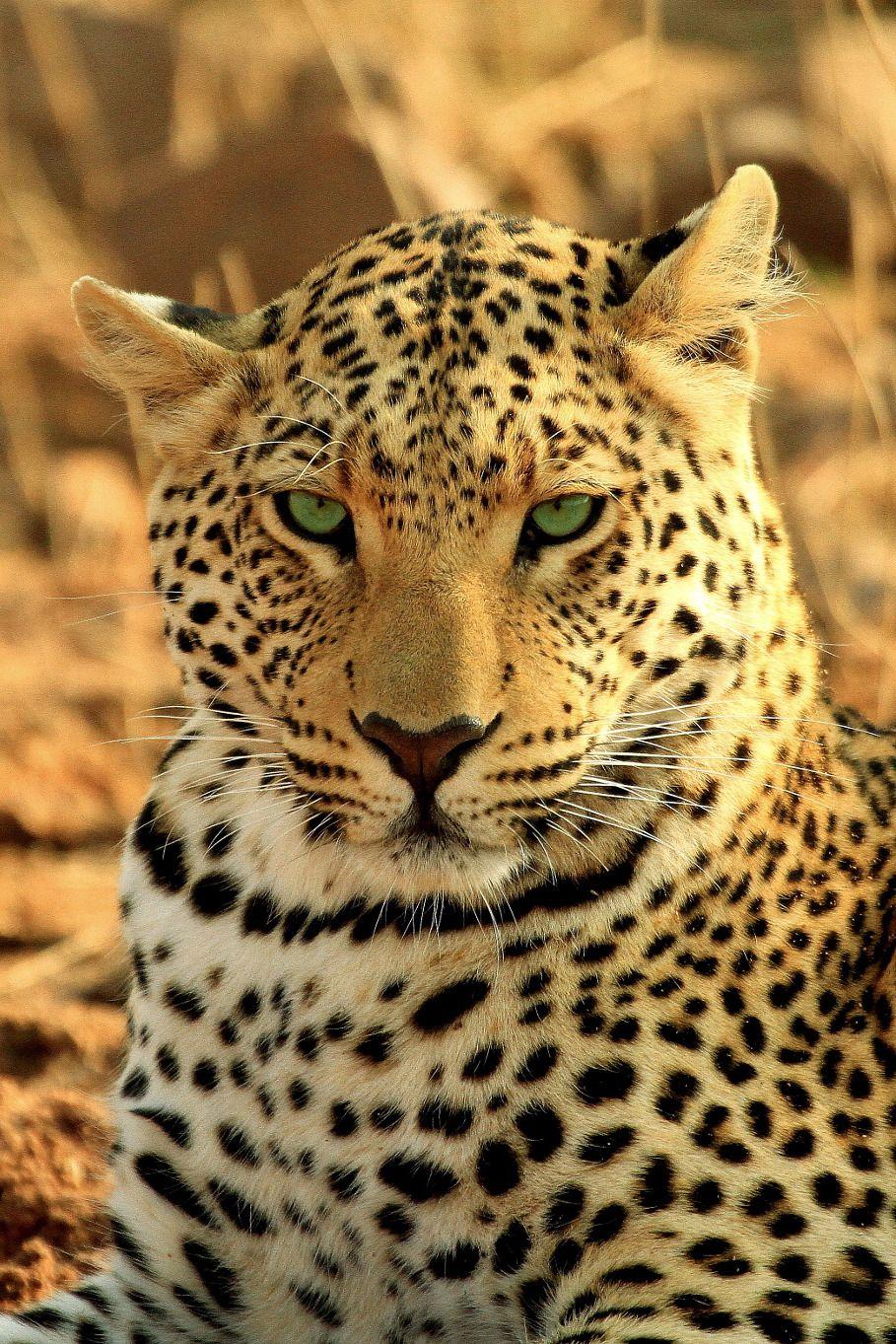 Quiet Confidence Photographer CV Animals beautiful