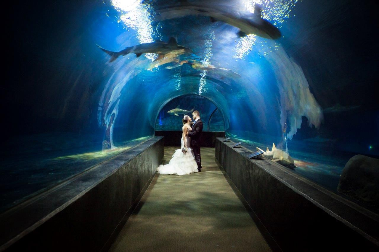 Shark Tunnel Wedding Oklahoma Aquarium Weddings
