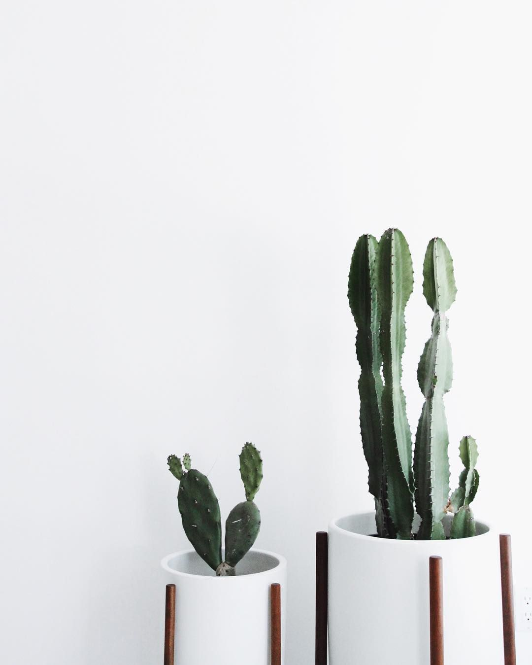 classy pictures of cactus house plants. Cacti babies in our new home  by mija Cactus Plants cactilove modernica