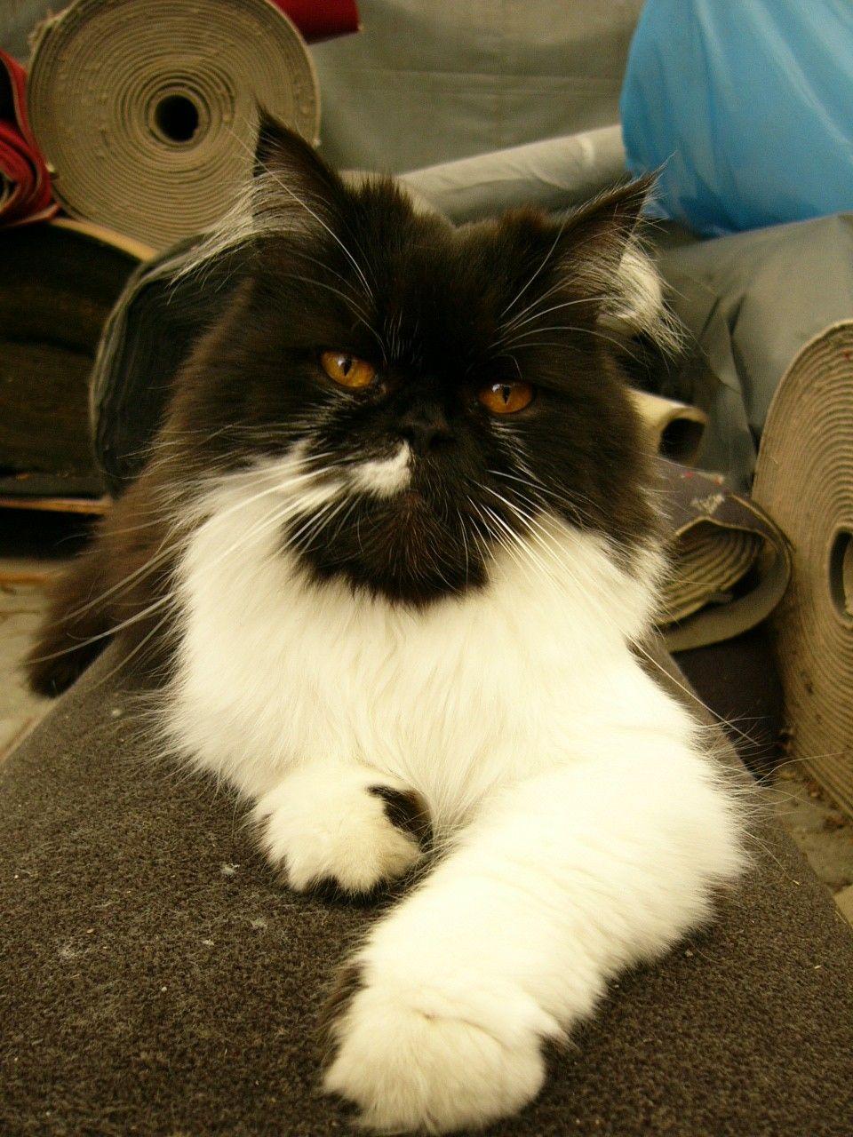 Pfiffi in the carpet store.