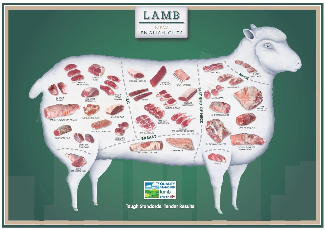 lamb cuts of meat chart | Below is a handy poster displaying Lamb ... for Lamb Cuts Chart  183qdu