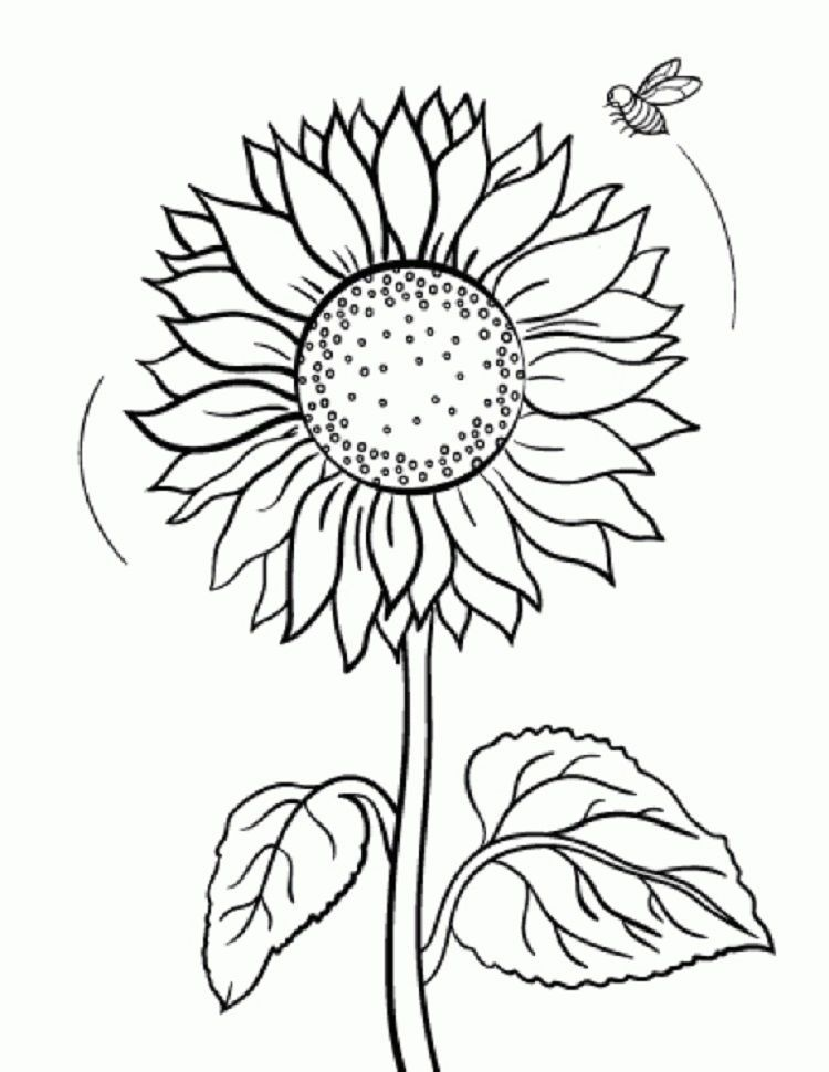 Sunflower Coloring Pages | Bee coloring pages, Sunflower ...