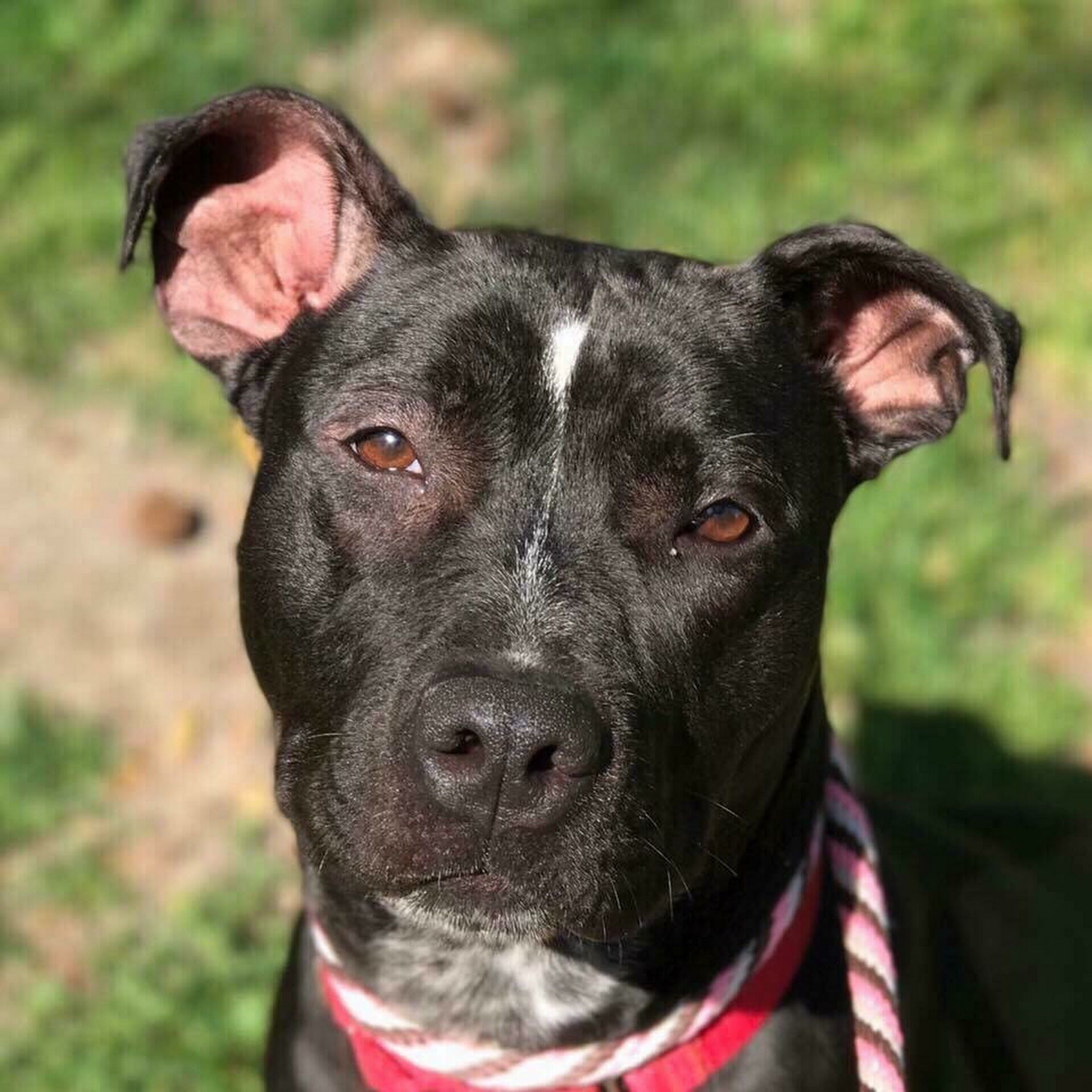 Another sweet girl goes unnoticed in a crowded shelter