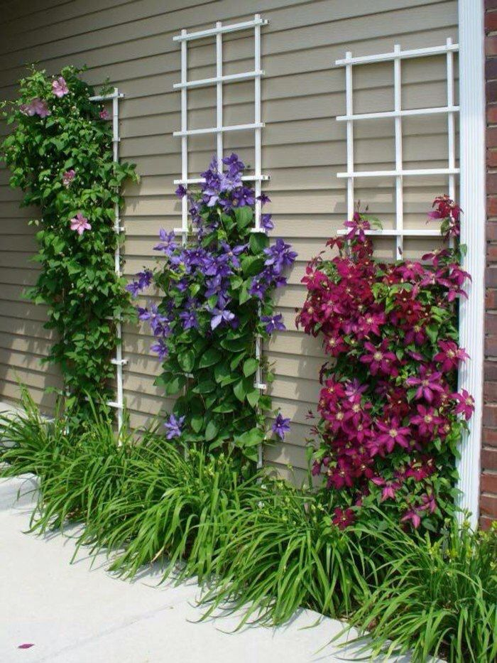 Attractive Trellis For Clematis Ideas Part - 11: Garden Design Garden Ideas Creepers - Use This For Black Fencing/trellis In  Sun Garden