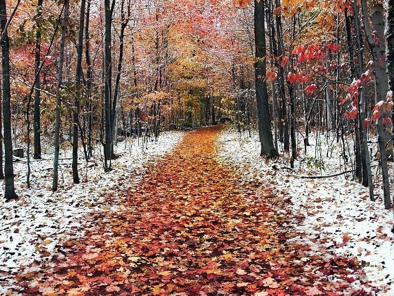 Resultado De Imagen Para Fondos De Otono Invierno Winter Nature Nature Wallpaper Winter Wallpaper