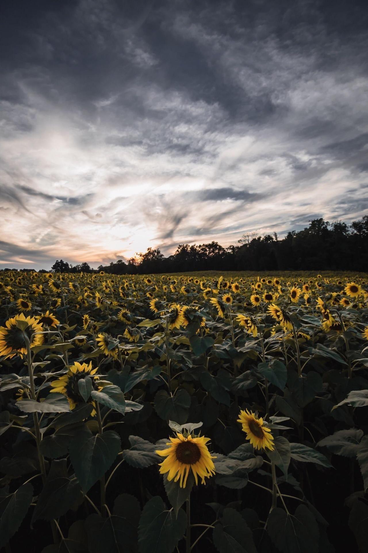 Earthpictureshere Maryland Usa Oc 1707x2560 Travel Photography Landscape Photography Landscape Photos
