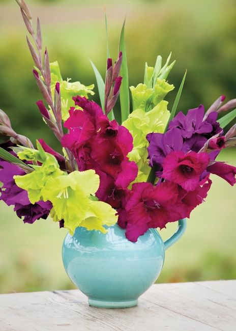 This is your complete how to guide to growing gladioli (gladiolus), choosing the varieties, planting and cutting.