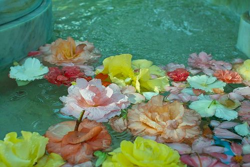 Floating Flowers Floral Photography Floating Flowers Water Flowers