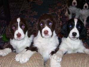 Our Jewel had blue eyes, too. Who can say no to these cuties.