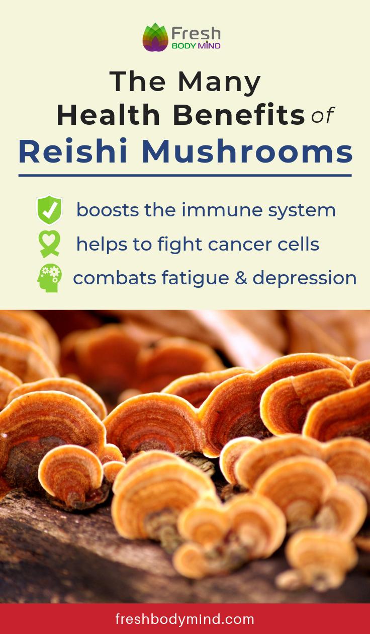 The Many Health Benefits of Reishi Mushrooms   Pin
