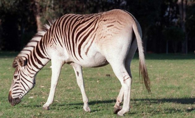 12 Fabulous Animals that Start with The Letter Q Extinct