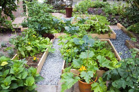 Eetbare tuin ontwerp google zoeken garden of eden for Tuinontwerp eetbare tuin