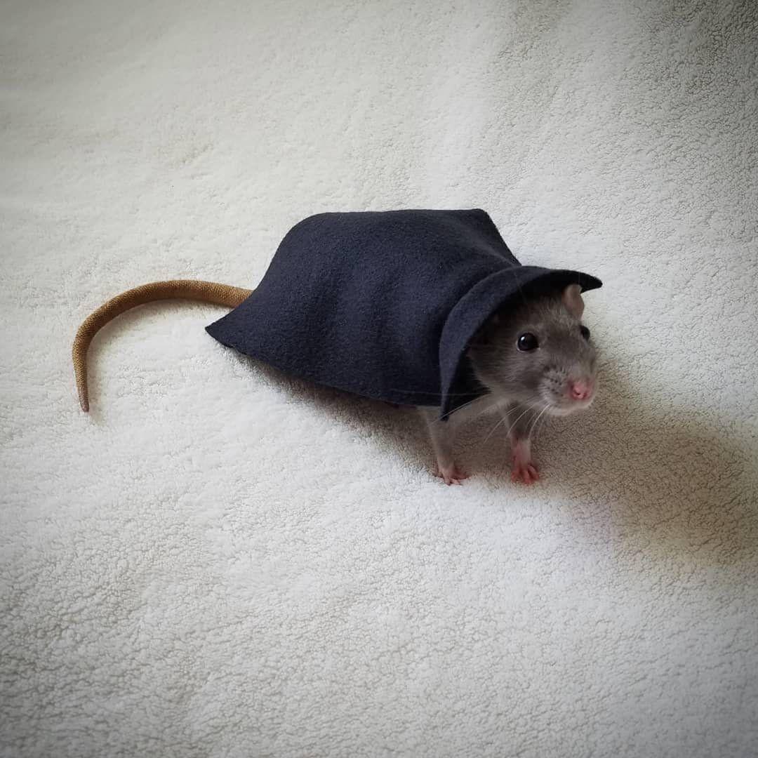 Short Collar Vampire Cape Costume For Pet Rat Halloween Etsy Rat Costume Vampire Cape Pet Rats