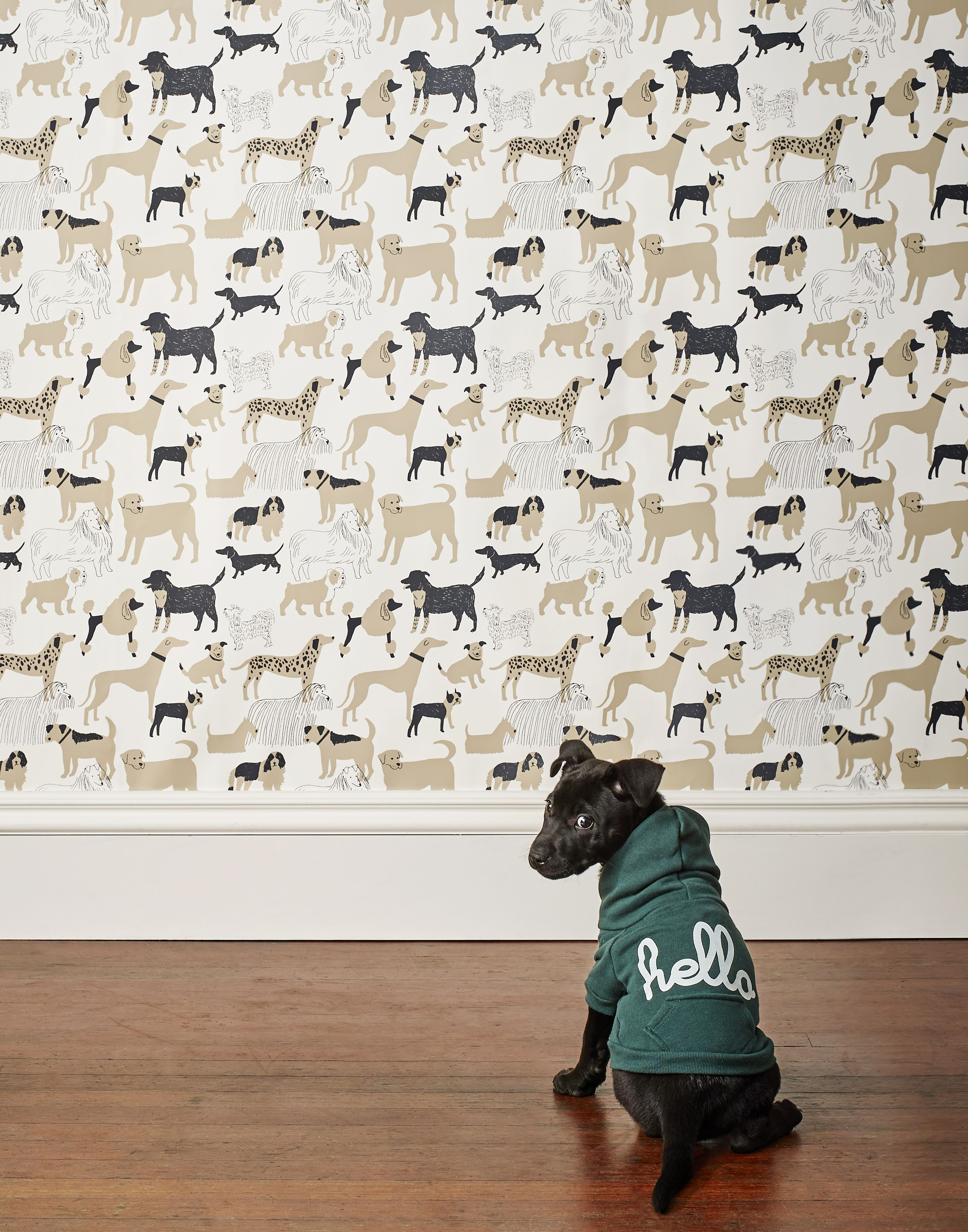 Say Hello To Our New Dog Park Taupe Wallpaper Wallpaper Love