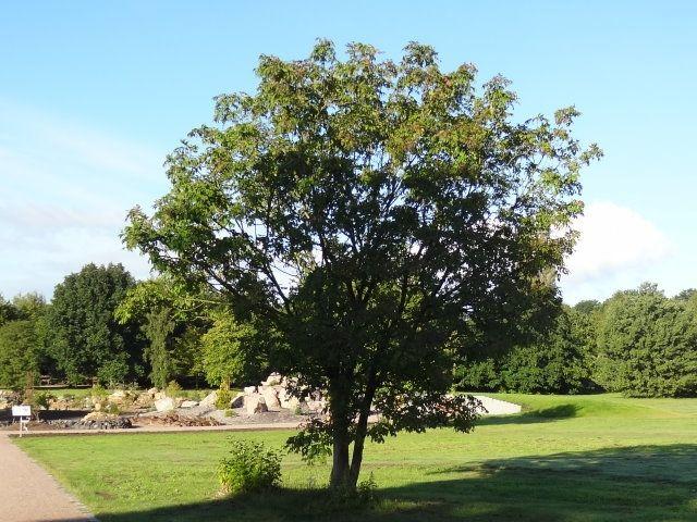 Baumschule Eggert baumschule eggert blütensträucher baumschulen heckenpflanzen