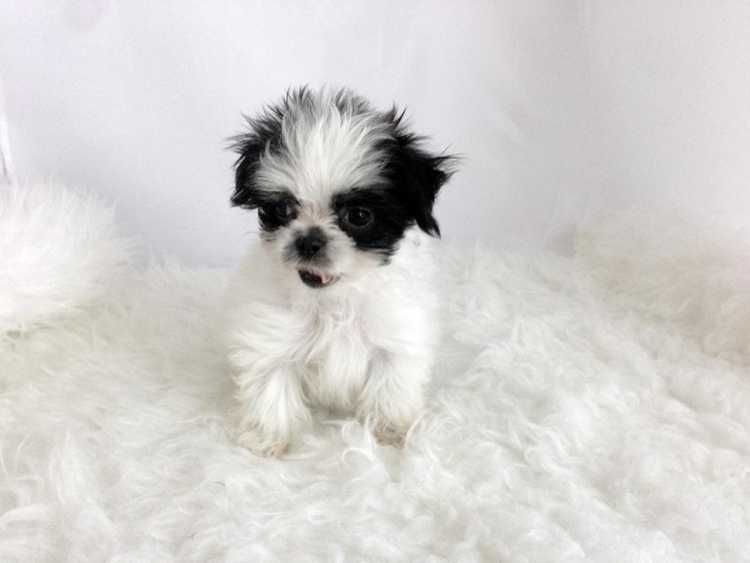 Visit Our Website Www Urbanpuppies Com Now And Check Out Our