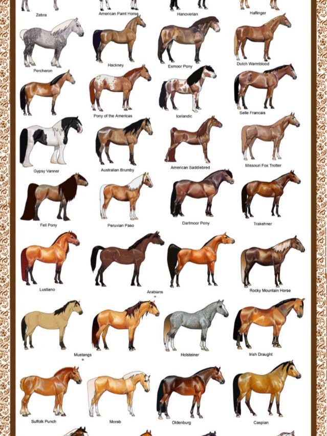2 Of 3 Horse Coloring Horses Horse Breeds