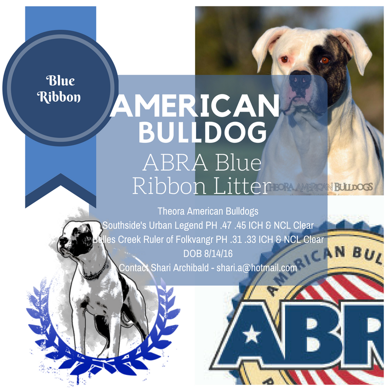 Abra Blue Ribbon Litter American Bulldog Puppies Bulldog