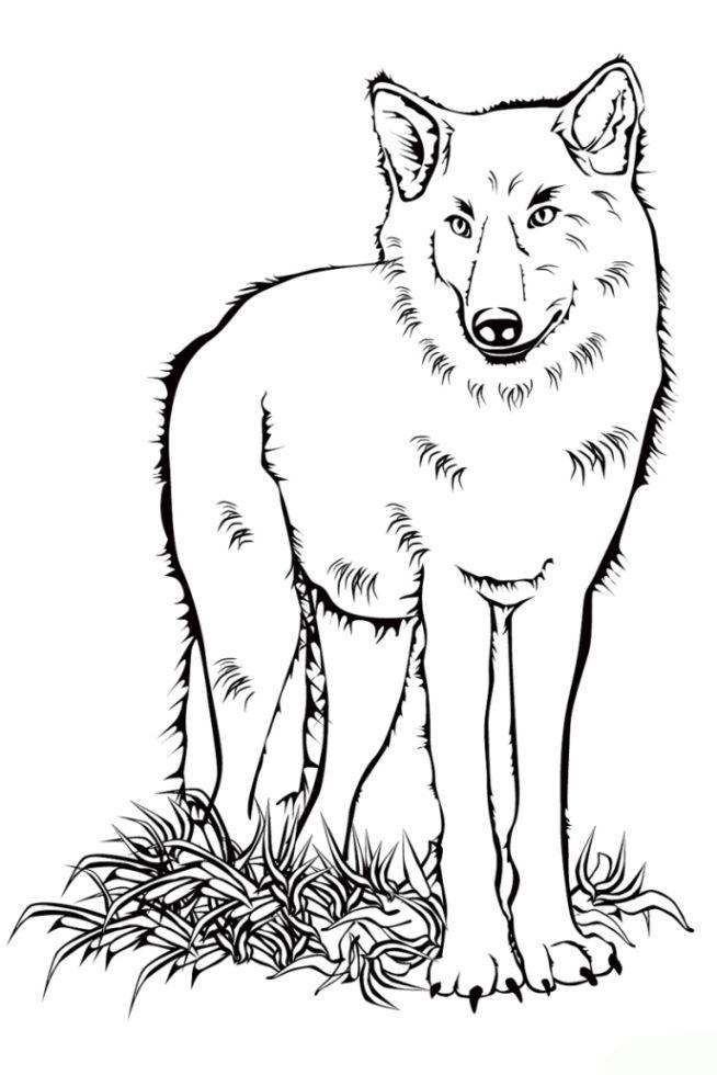 gratis malvorlagen wolf  kinder zeichnen und ausmalen