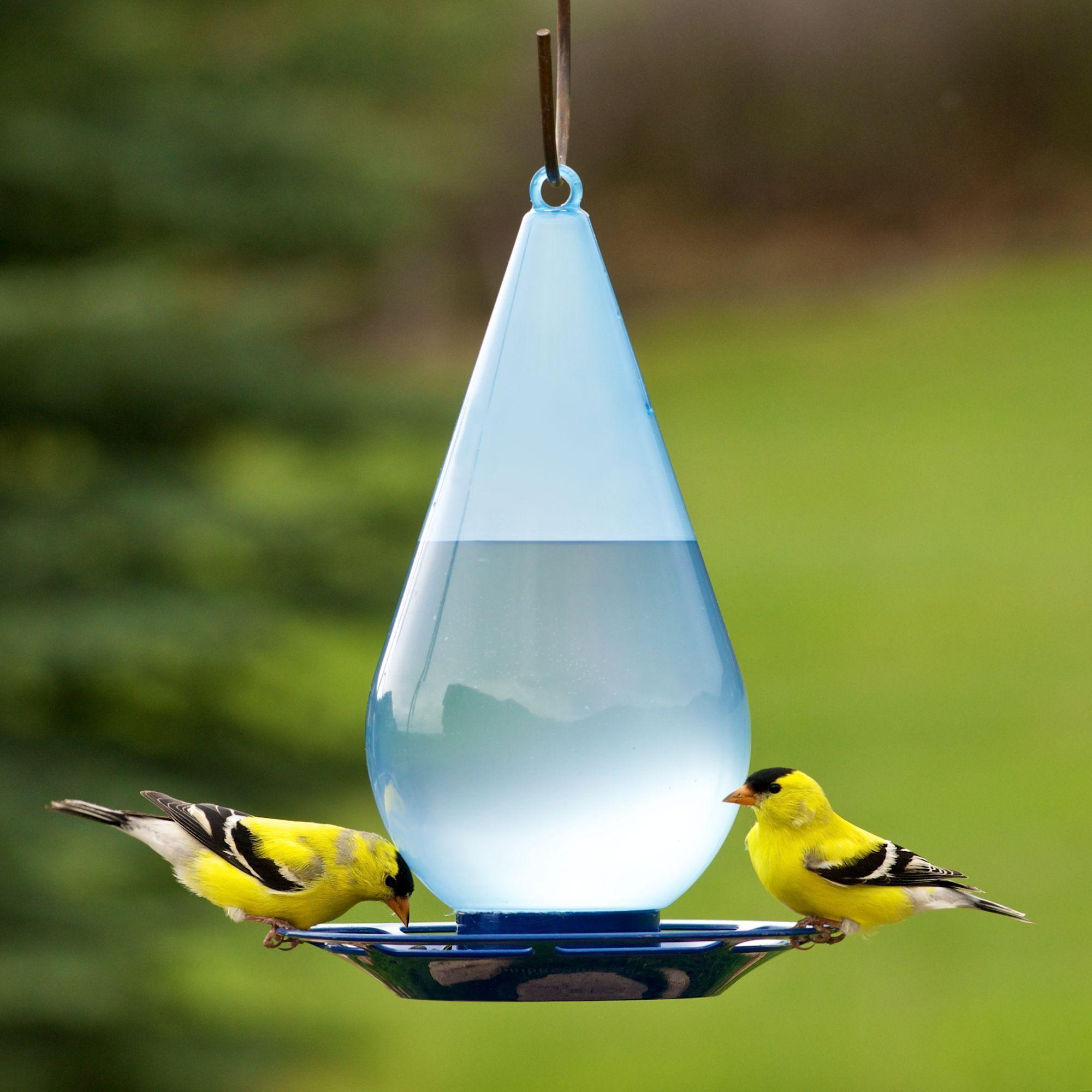 Pin On Bird Stuff