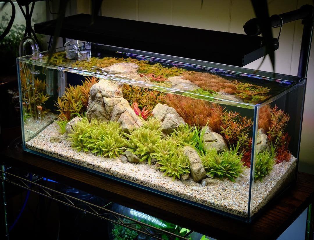Beautiful Planted Aquarium With Downoi On The Foreground Aquarium Planted Aquarium Aquascape