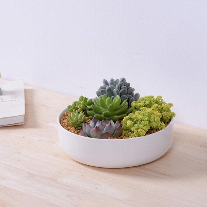 Bonsai ceramic flower pot diy small planter succulent What are miniature plants grown in pots called