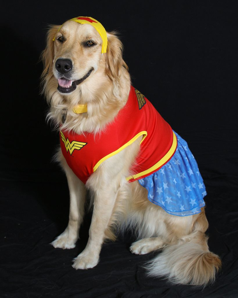 Our Super Hero Dogs Wonder Woman Superhero
