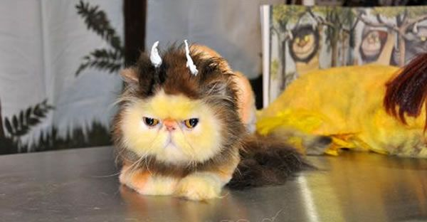 Where The Wild Things Are Cat Creative Grooming Dog Grooming Extreme Pets
