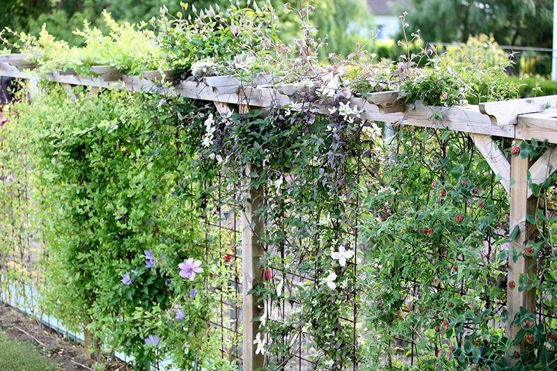 remplac une haie par une structure a rienne decorer le jardin pinterest jardins. Black Bedroom Furniture Sets. Home Design Ideas