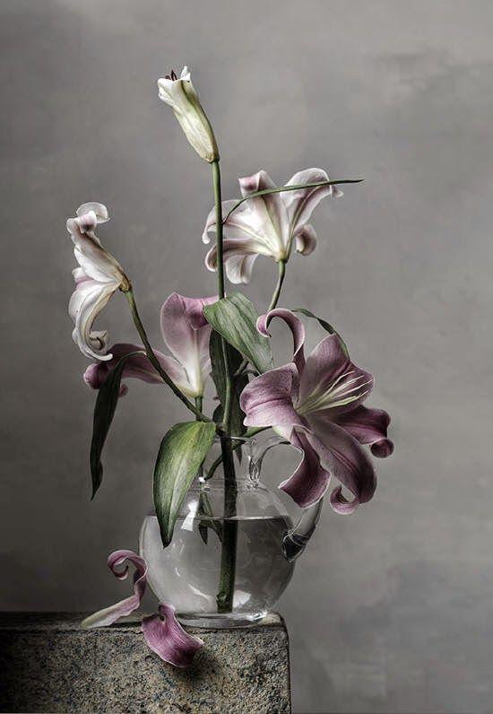 Fine arts Photography - Christopher Broadbent | Still life ...