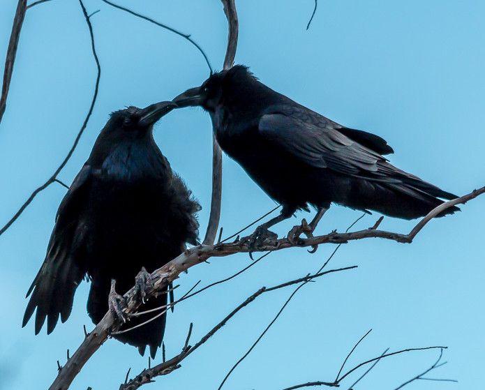 Raven sky kiss agree