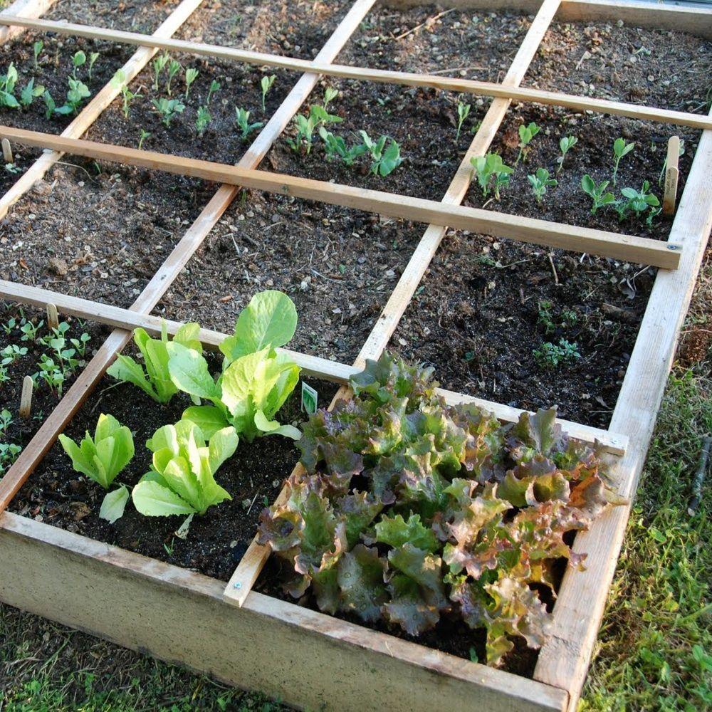 Urban Vegetable Gardening For Beginners