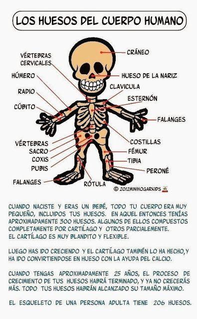 Resultado de imagen para el cuerpo humano en infantil