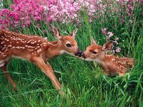 Spring Kisses, Olympic National Park, Washington