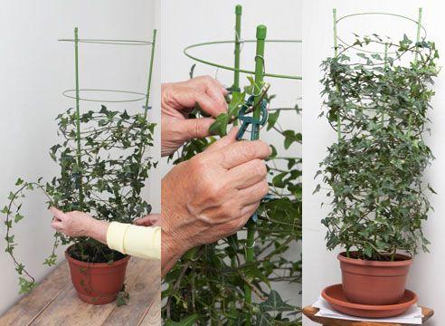 Опоры для комнатных цветов своими руками фото