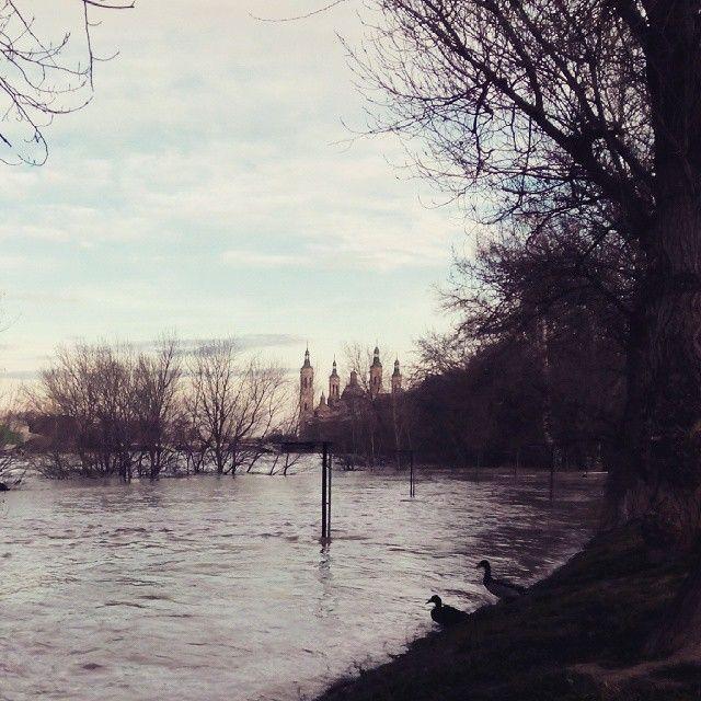 La crecida del Ebro a su paso por el parque de San Pablo #zaragoza