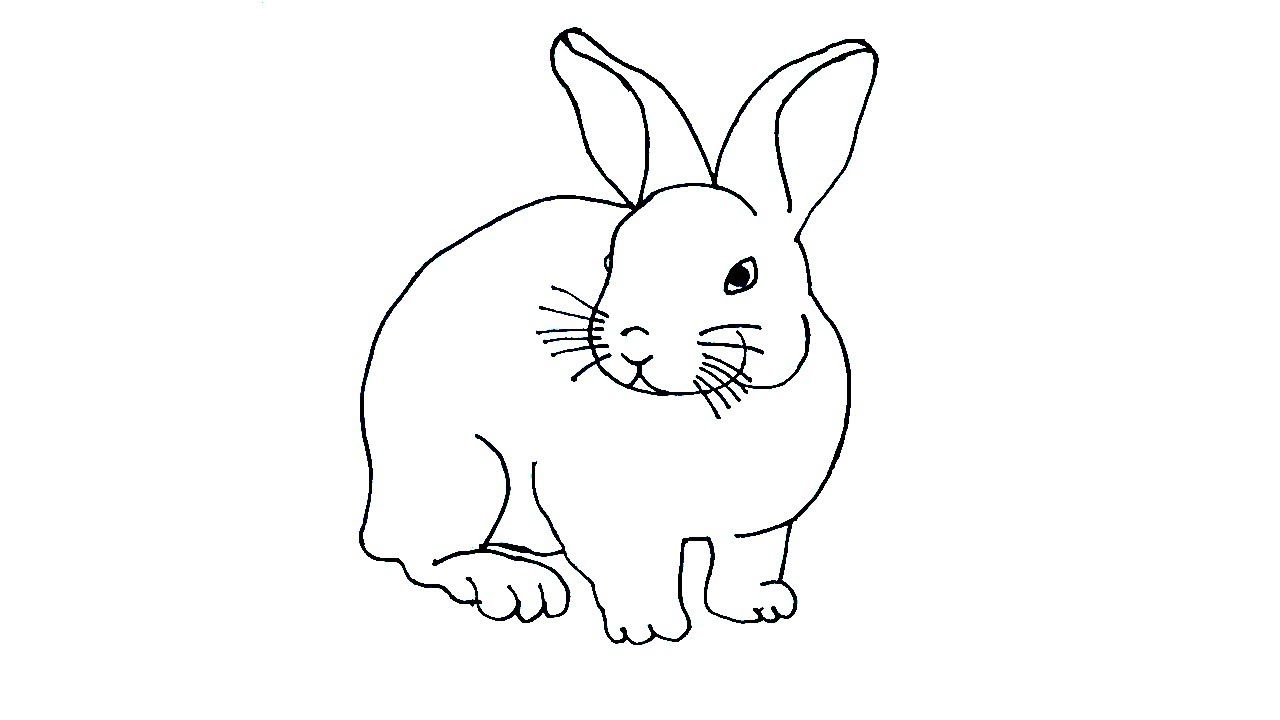 - Rabbit Drawing Colour Easy And Simple Rabbit Drawing Rabbit