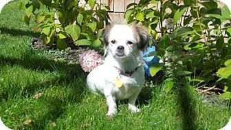 Pin By Rebecca Gagne On Dog Choices King Charles Spaniel