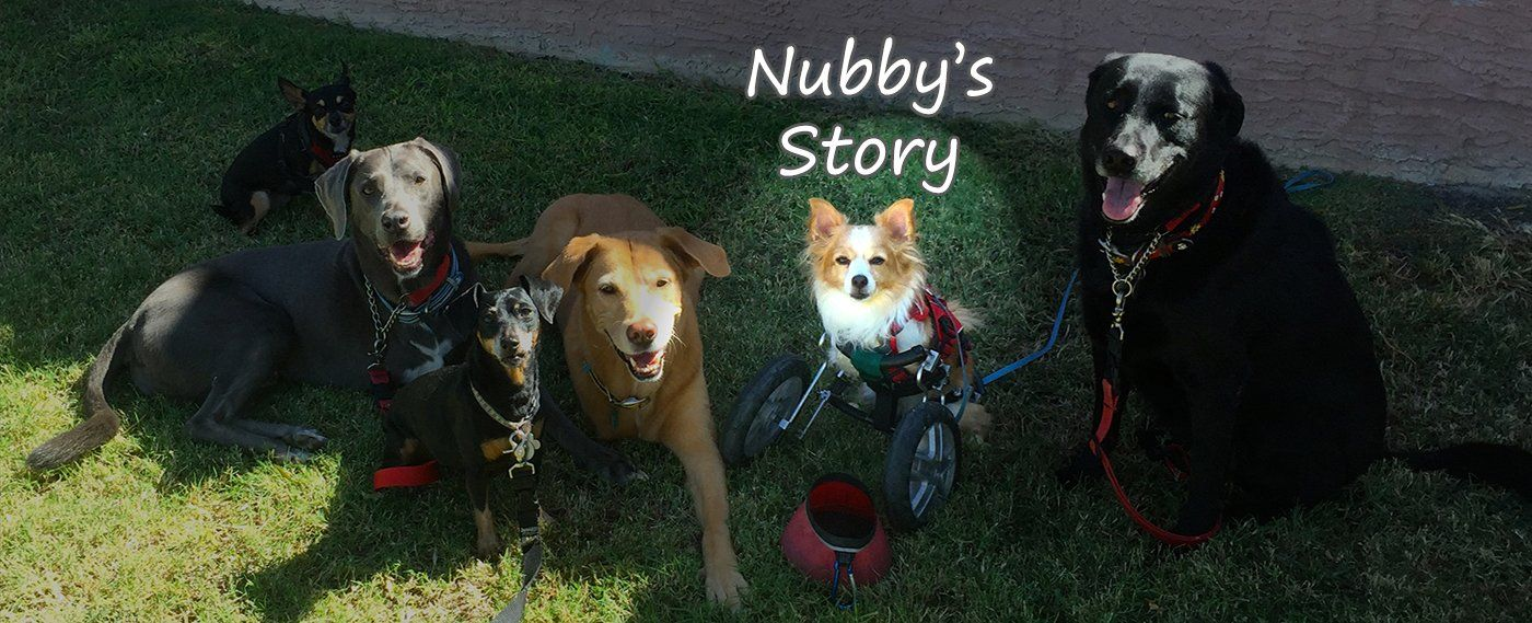 Nubby, Chandler, Arizona Nubby, Rescue dogs, Happy tails