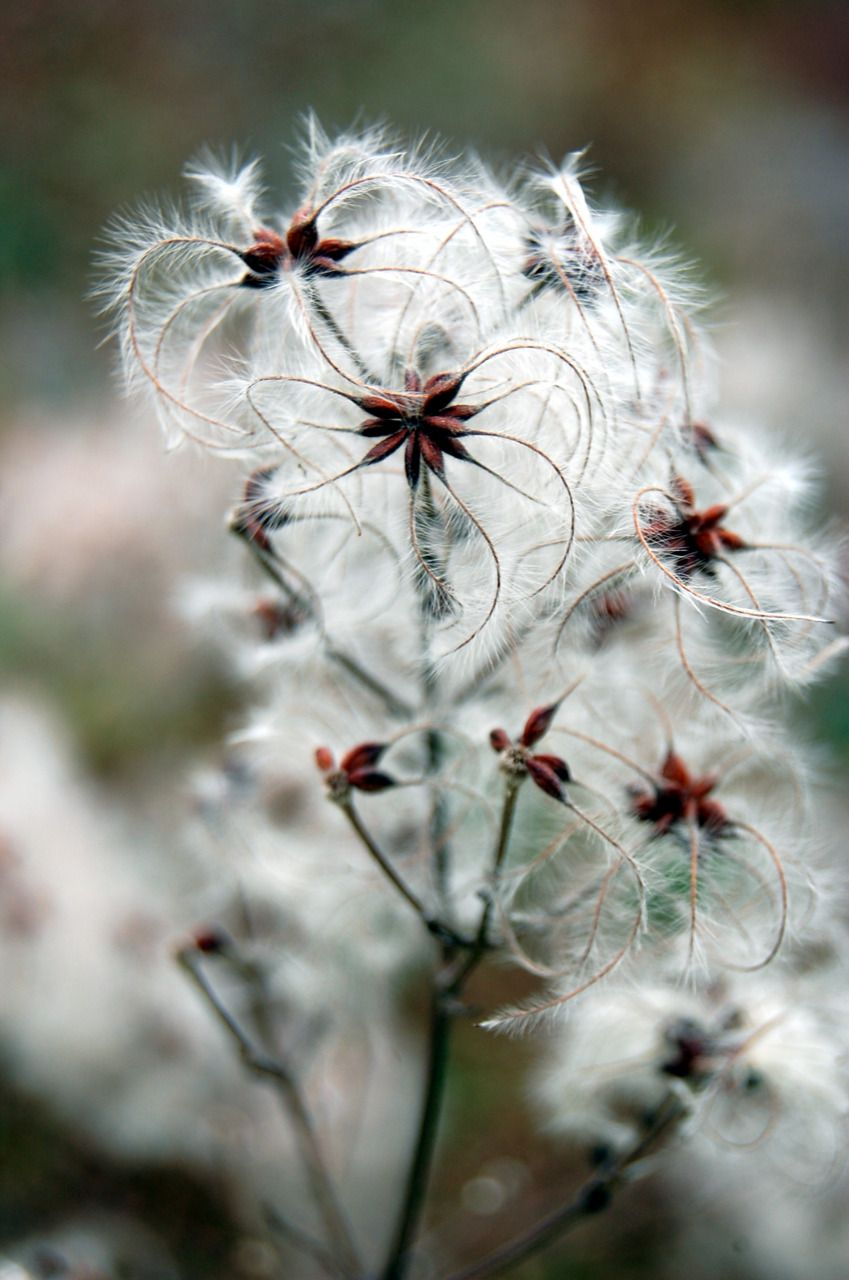 Dont Know What This Is Called But It Is So Delicate And Airy