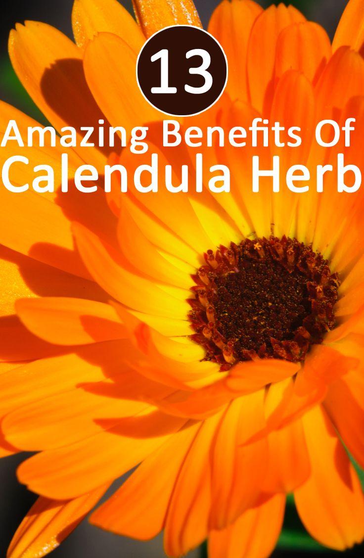 What Is Calendula? How Does It Benefit You? Calendula